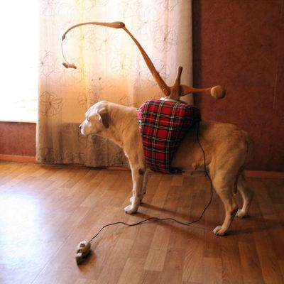Prothèse pour chien aveugle