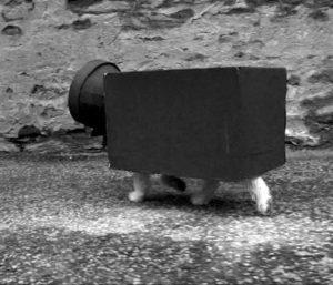 Le chien de l'homme caméra