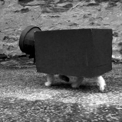 Cheval caméramiste